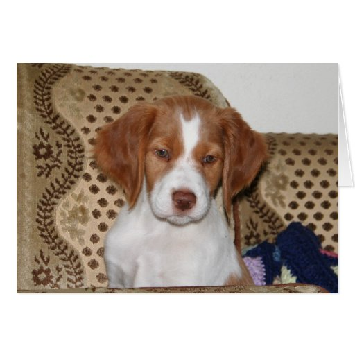 Brittany Puppy Notecard Card