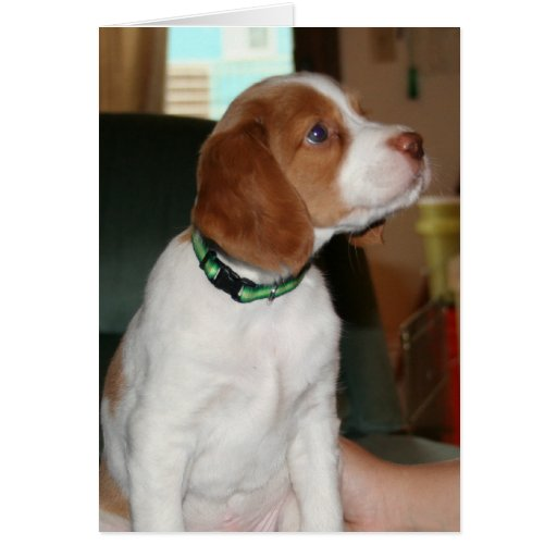 Brittany Puppy Notecard Greeting Card