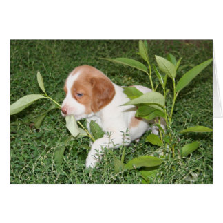 Brittany Puppy with grass Notecard Note Card