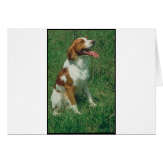 Brittany Spaniel Cards