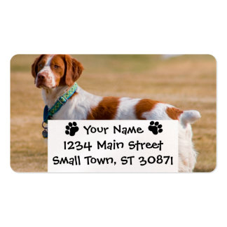 Brittany Spaniel Dog Beautiful Pack Of Standard Business Cards