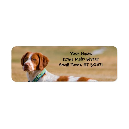 Brittany Spaniel Dog Beautiful Return Address Label