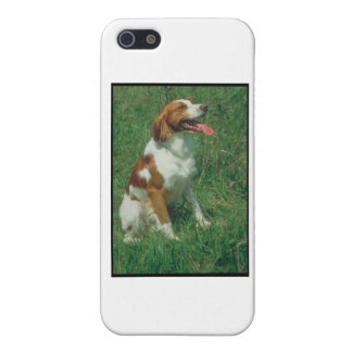 Brittany Spaniel iPhone 5/5S Case