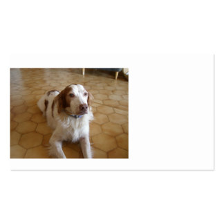 brittany spaniel laying.png pack of standard business cards