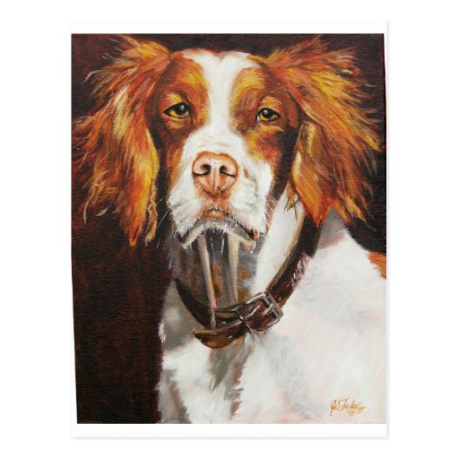 Brittany Spaniel Post Cards