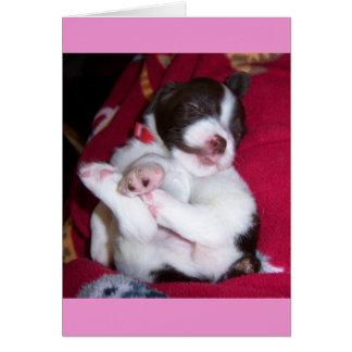 BRITTANY SPANIEL PUPPY GREETING CARD