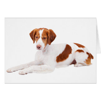 Brittany Spaniel Puppy Dog Blank Note Card