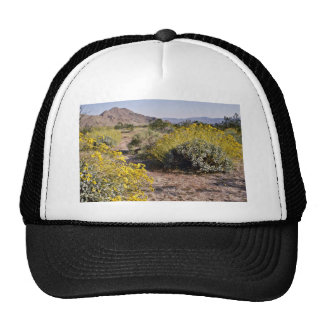 Brittle Bush - Joshua Tree National Monument flowe Cap