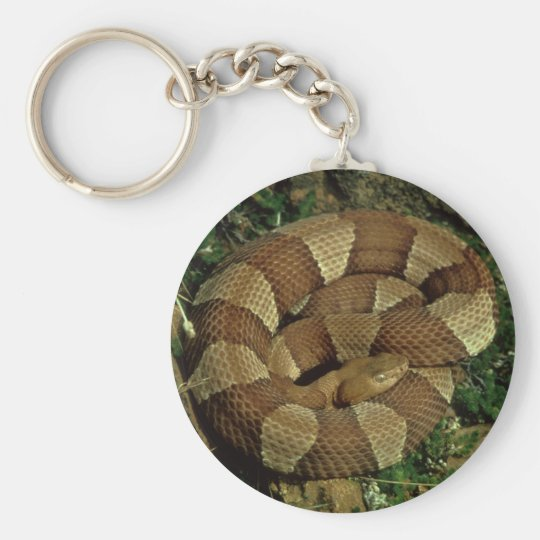 broad-banded copperhead snake keychain