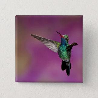 Broad-Billed Hummingbird, Cynanthus 15 Cm Square Badge
