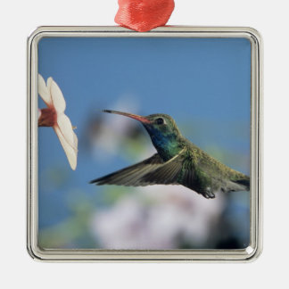 Broad-billed Hummingbird, Cynanthus 2 Christmas Ornament