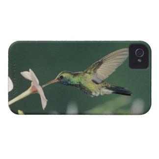 Broad-billed Hummingbird, Cynanthus latirostris, Case-Mate iPhone 4 Case
