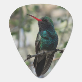 Broad-billed Hummingbird Guitar Pick