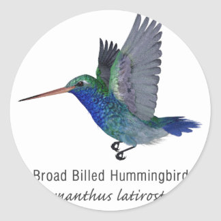 Broad Billed Hummingbird with Name Classic Round Sticker