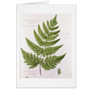 Broad Prickly-toothed Buckler Fern, painted at Bra Card