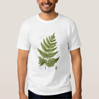 Broad Prickly-toothed Buckler Fern, painted at Bra T Shirts