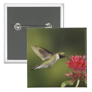 Broad-tailed Hummingbird, Selasphorus 2 15 Cm Square Badge