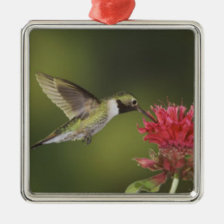 Broad-tailed Hummingbird, Selasphorus 2 Christmas Ornament