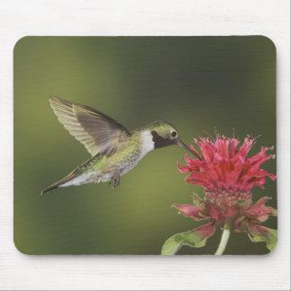 Broad-tailed Hummingbird, Selasphorus 2 Mouse Mat