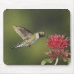 Broad-tailed Hummingbird, Selasphorus 2 Mouse Pad