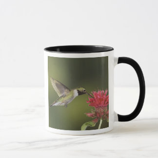 Broad-tailed Hummingbird, Selasphorus 2 Mug