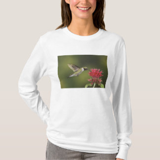 Broad-tailed Hummingbird, Selasphorus 2 T-Shirt