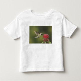 Broad-tailed Hummingbird, Selasphorus 2 Toddler T-Shirt