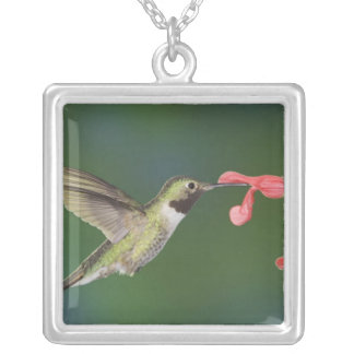 Broad-tailed Hummingbird, Selasphorus 4 Silver Plated Necklace