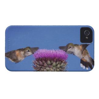 Broad-tailed Hummingbird, Selasphorus iPhone 4 Cover