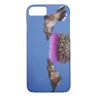 Broad-tailed Hummingbird, Selasphorus iPhone 8/7 Case
