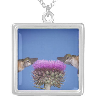 Broad-tailed Hummingbird, Selasphorus Silver Plated Necklace