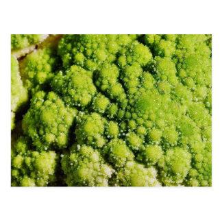 Brocco Flower Vegetable Postcard