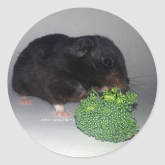Broccoli is Healthy and Delicious Round Stickers