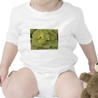 Broccoli Creeper