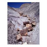 Broken logs, Petrified Forest National Park, Arizo Post Card