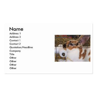 Broken tri color mini rex rabbit head on waterer business cards