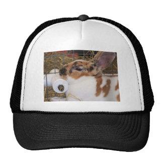 Broken tri color mini rex rabbit head on waterer mesh hat