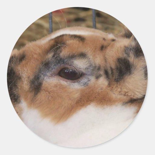 Broken tri color mini rex rabbit head on waterer round stickers