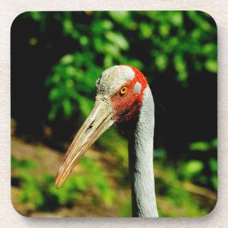 Brolga bird portrait drink coasters