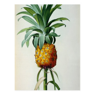 Bromelia Ananas, from 'Les Bromeliacees' Postcard