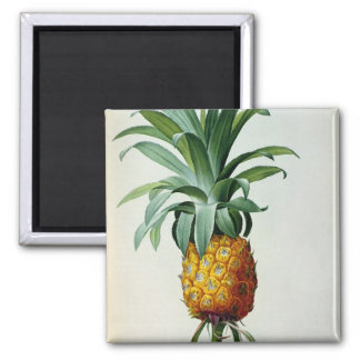 Bromelia Ananas, from 'Les Bromeliacees' Square Magnet
