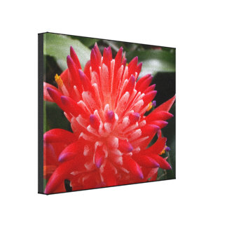 Bromeliad Flower Canvas Print