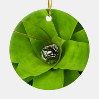 Bromeliad Green Nature Botanical Photography Round Ceramic Decoration