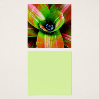 Bromeliad heart macro photography square business card