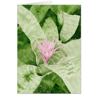 Bromeliad Notecards Note Card