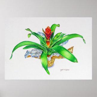 Bromeliad Watercolor Poster