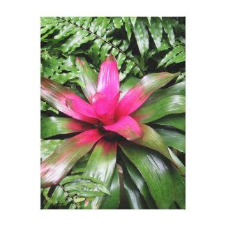 Bromeliad with Ferns Canvas Print