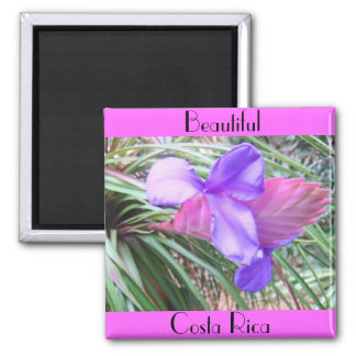 Bromeliads of Costa Rica Square Magnet