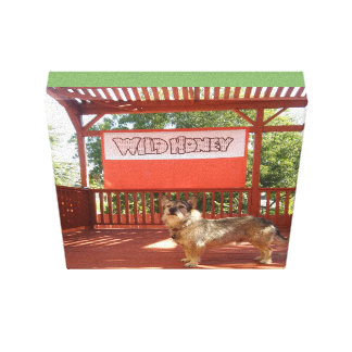 Bronx on the Wild Honey Backyard Stage Canvas Print