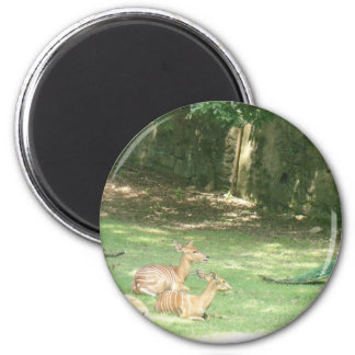 Bronx Zoo  Image Magnet